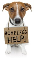 homless help dog